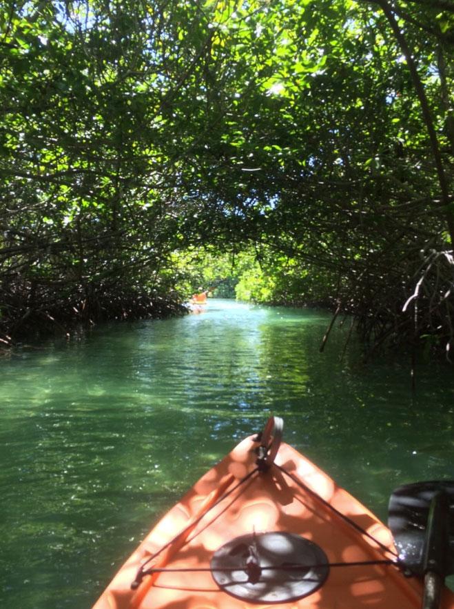mangrove-kayak-bonaire